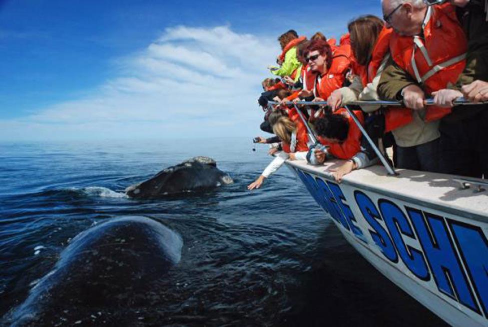Avistaje de ballenas en  Puerto Pirámide: te cambia la vida